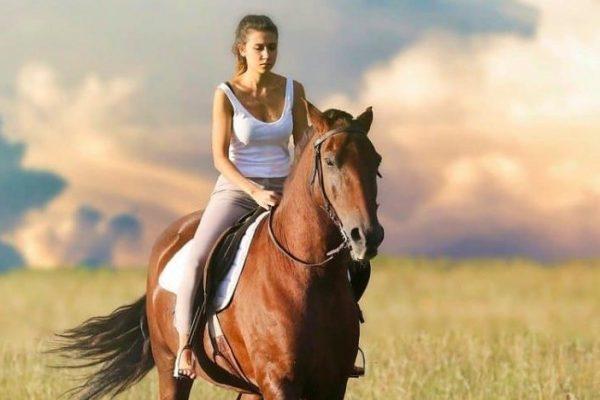 Pferdeversicherung