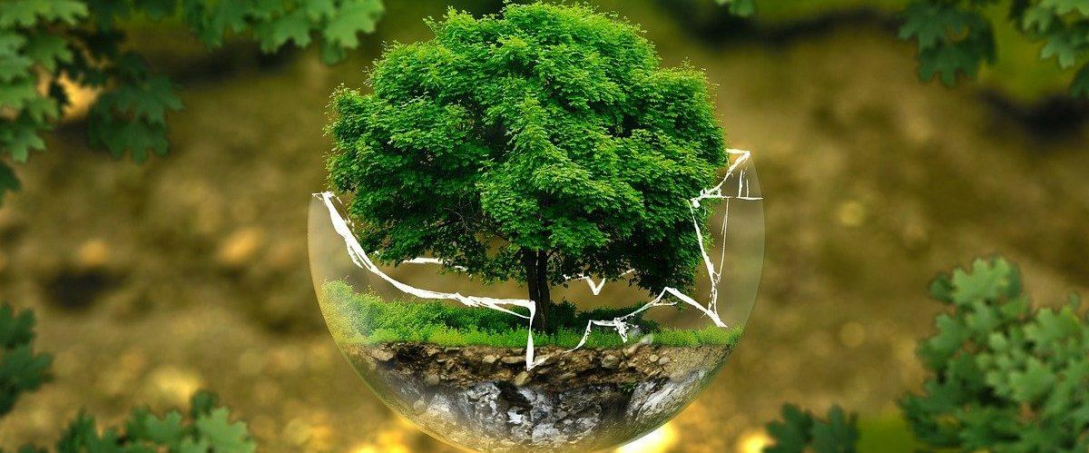 Was Sie schon immer über nachhaltige Geldanlagen wissen wollten